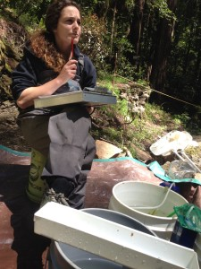 Wondering how many coho smolts outmigrate from San Geronimo Creek Watershed each year