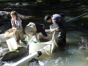 Research assistant and citizen scientists gently collecting fish.