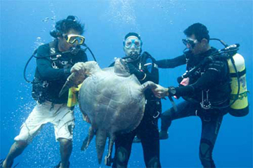 Dive with Turtles and Hammerhead Sharks at Cocos Island
