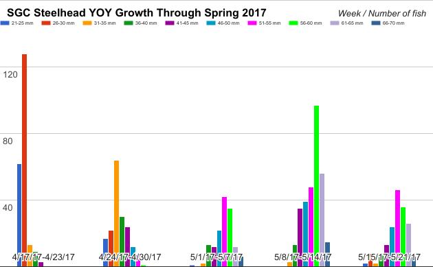 Smolt Monitoring 2017 Data, N. Evanoff