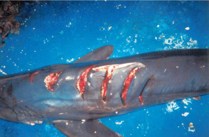 4. bloody dolphin107
