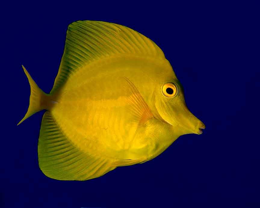 Hawaii Aquarium Trade Reform Effort Falls Short