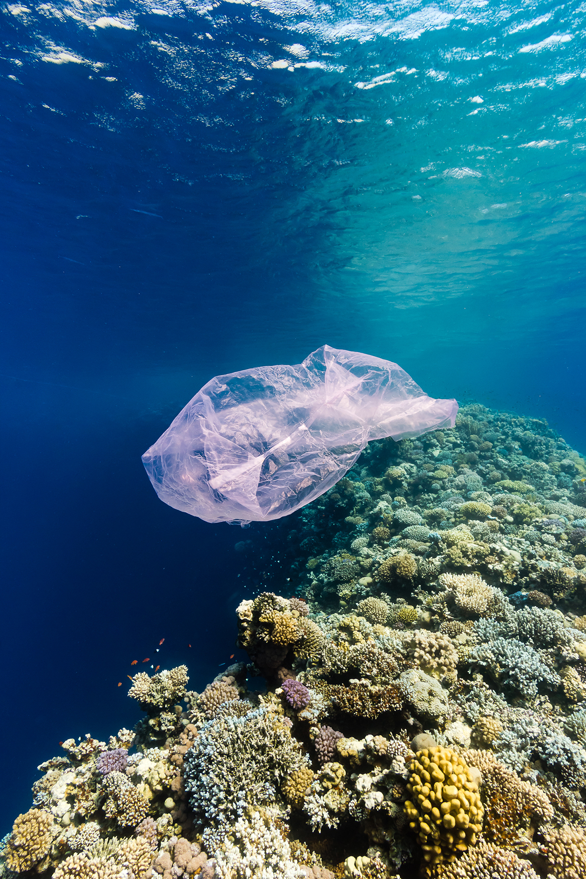 """Bring the Bag"" PSA Launched in Galveston, Texas, to Reduce Single-Use Plastic Bag Pollution"