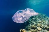 Plastic-bag-red-sea-TWITTER