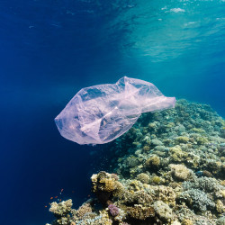 Plastic-bag-red-sea-TWITTER