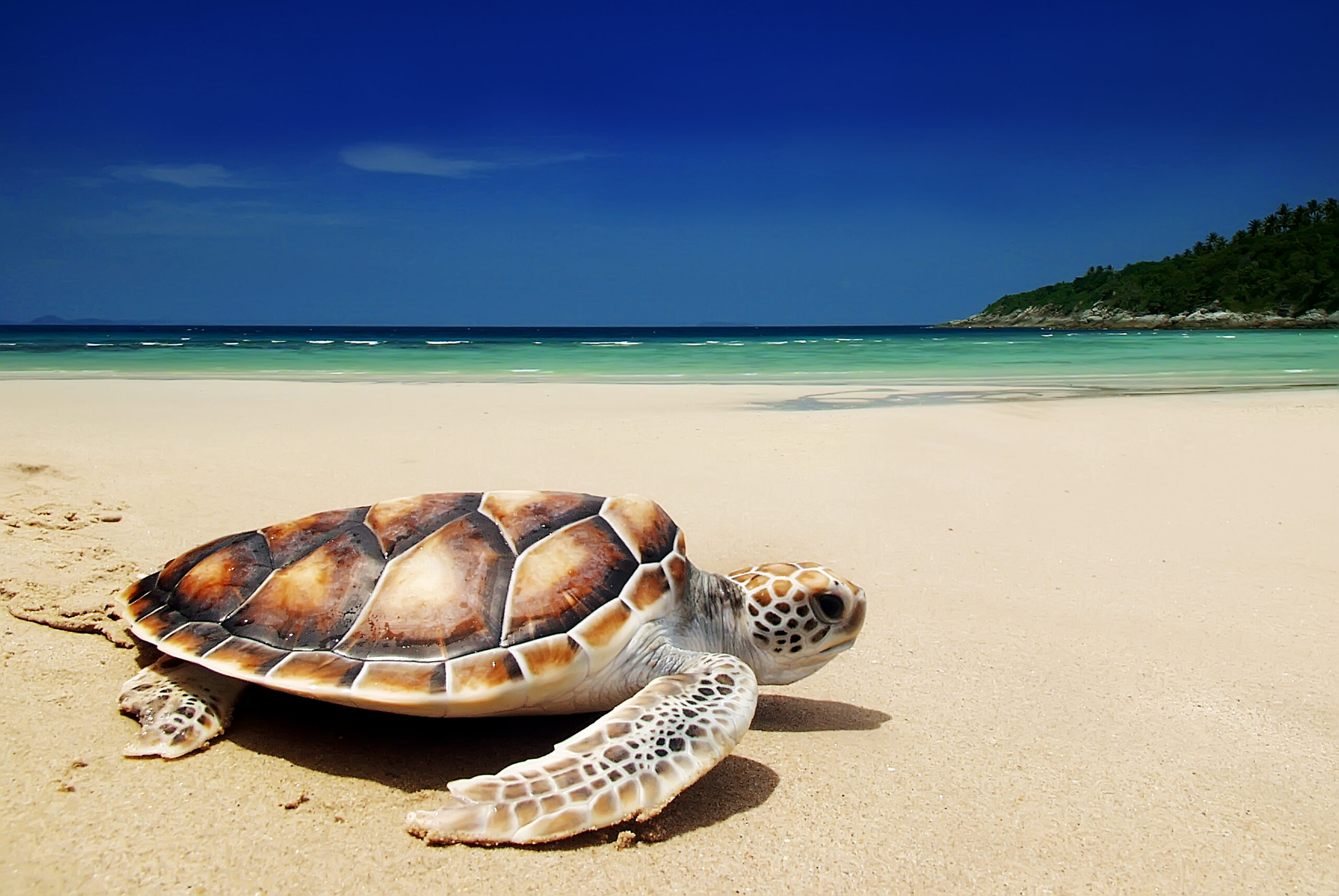 Turtle Island Submits Comments to NOAA to Defend Marine Monuments and Sanctuaries