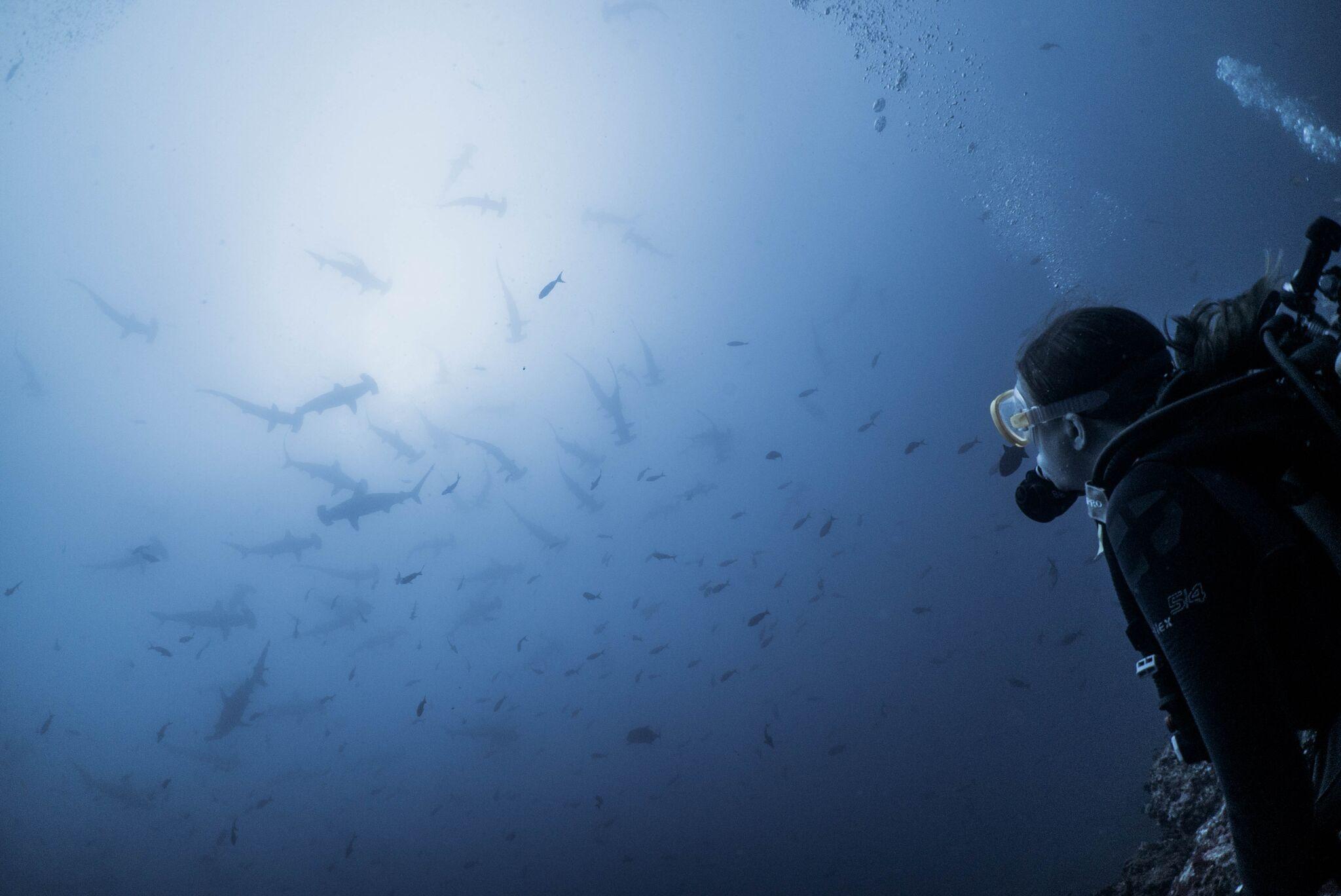 Cassie Burdyshaw: Diving in Cocos