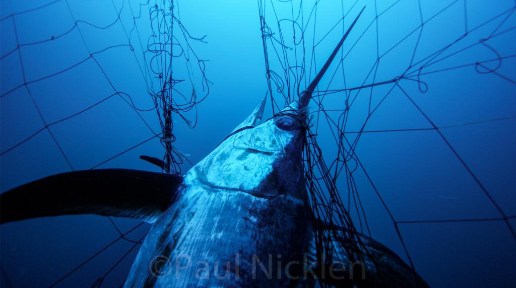 swordfish driftnet