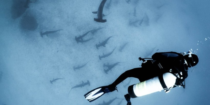 Todd Steiner with Hammerhead Sharks