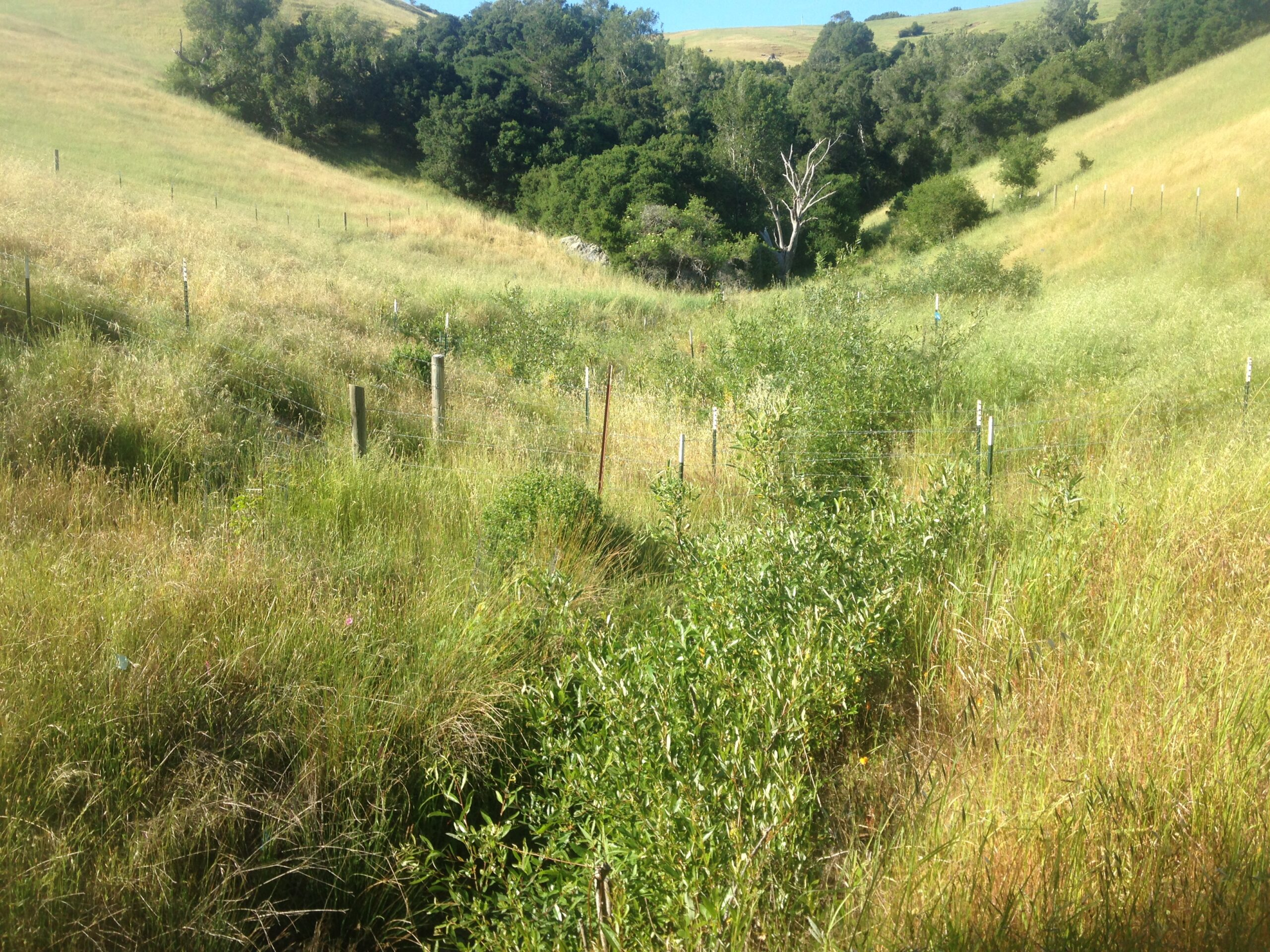 Riparian Fencing Project a Success