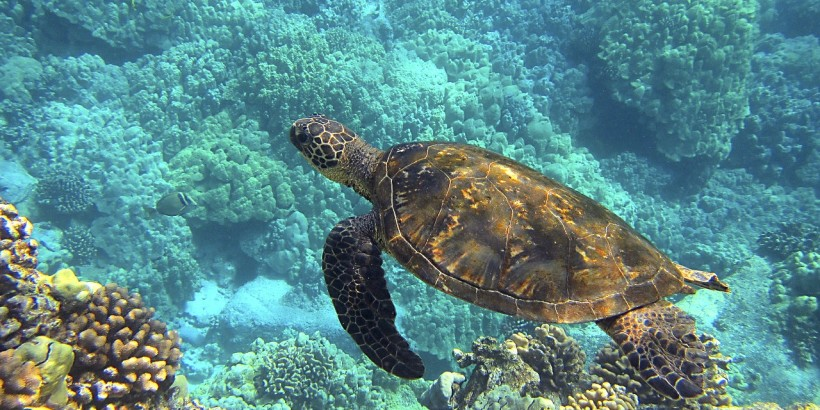 Hawaii_Web_Featured