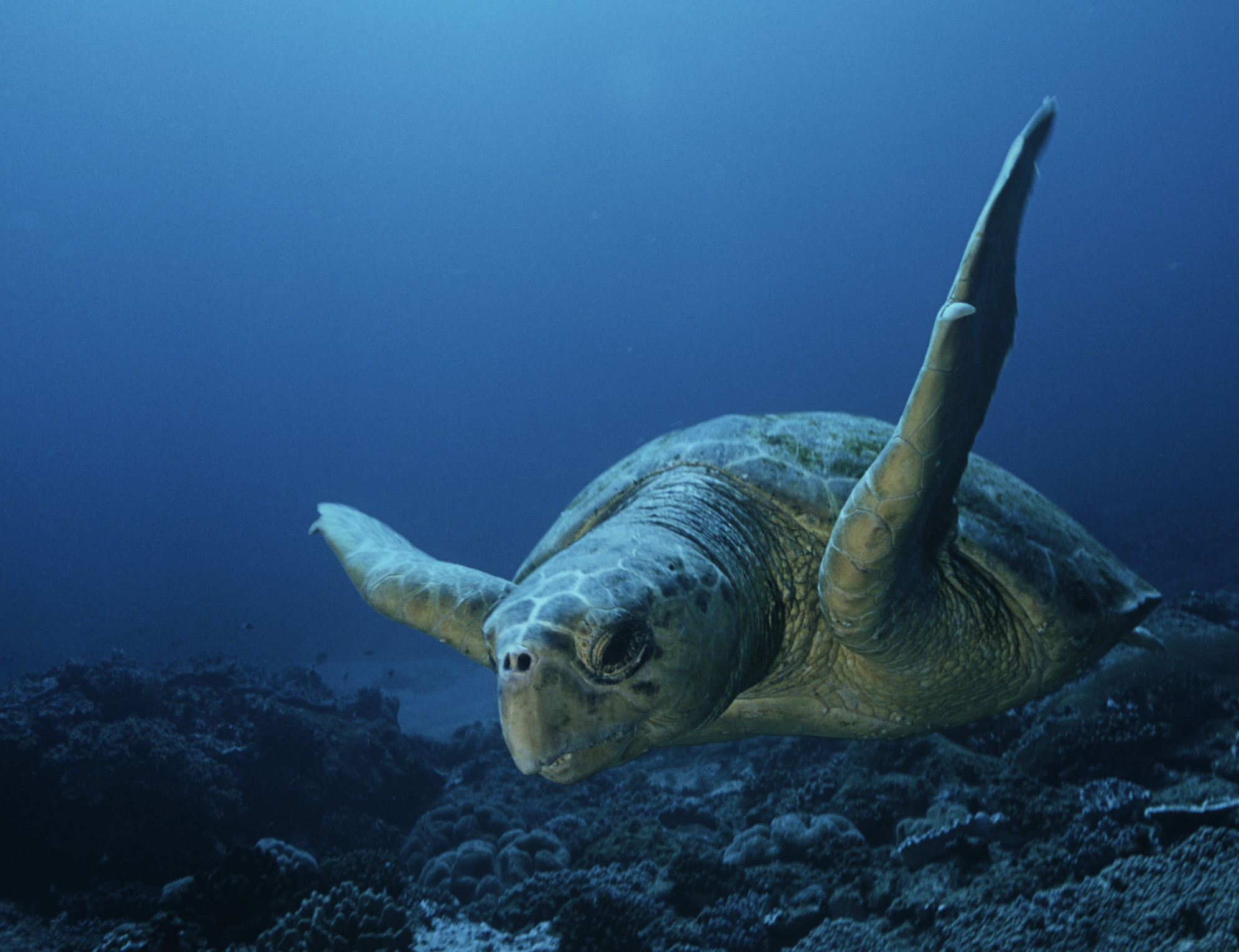 Court: Feds Unlawfully Allowed Hawai'i Fishery to Kill Protected Sea Turtles, Birds