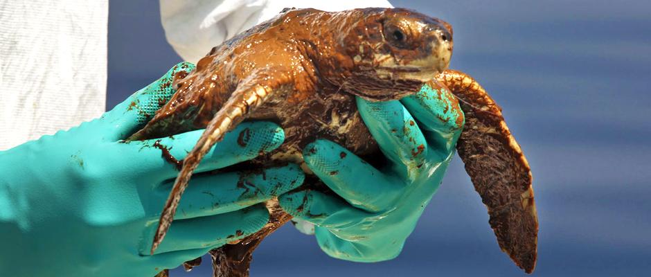 sea-turtle1_NOAA