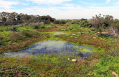 California Vernal Pool by Joanna Gilkeson, USFWS
