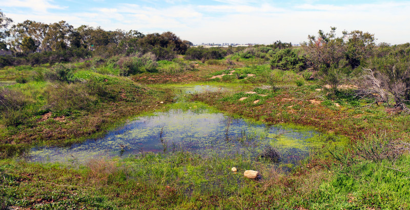 California Vernal Pool by Joanna Gilkeson, USFWS