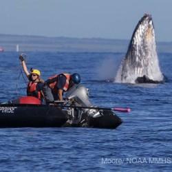 Successful whale rescue.