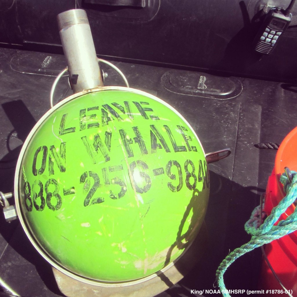 Leave on whale buoy.
