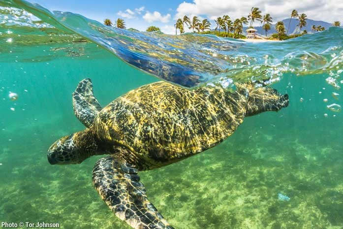 Defend Turtle-Saving Technology in the Gulf of Mexico