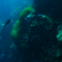 Marine Protected Areas Brazil
