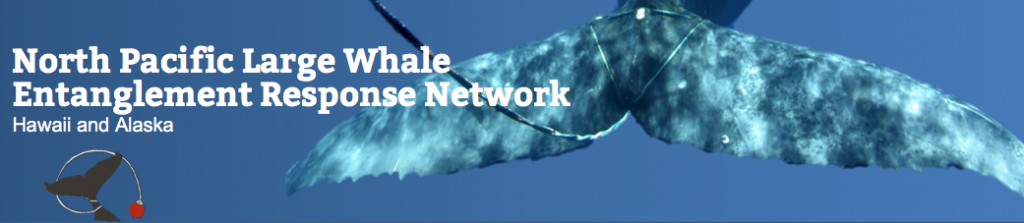 North Pacific Large Whale Entanglement Response Network