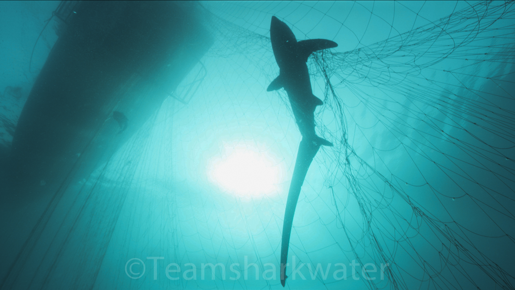 Shocking Undercover Investigations of Commercial Seafood Industry Expose Cruelty of Driftnets