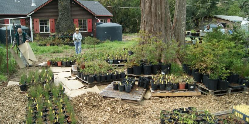 Native Plant Nursery Intern (Non-Residential)
