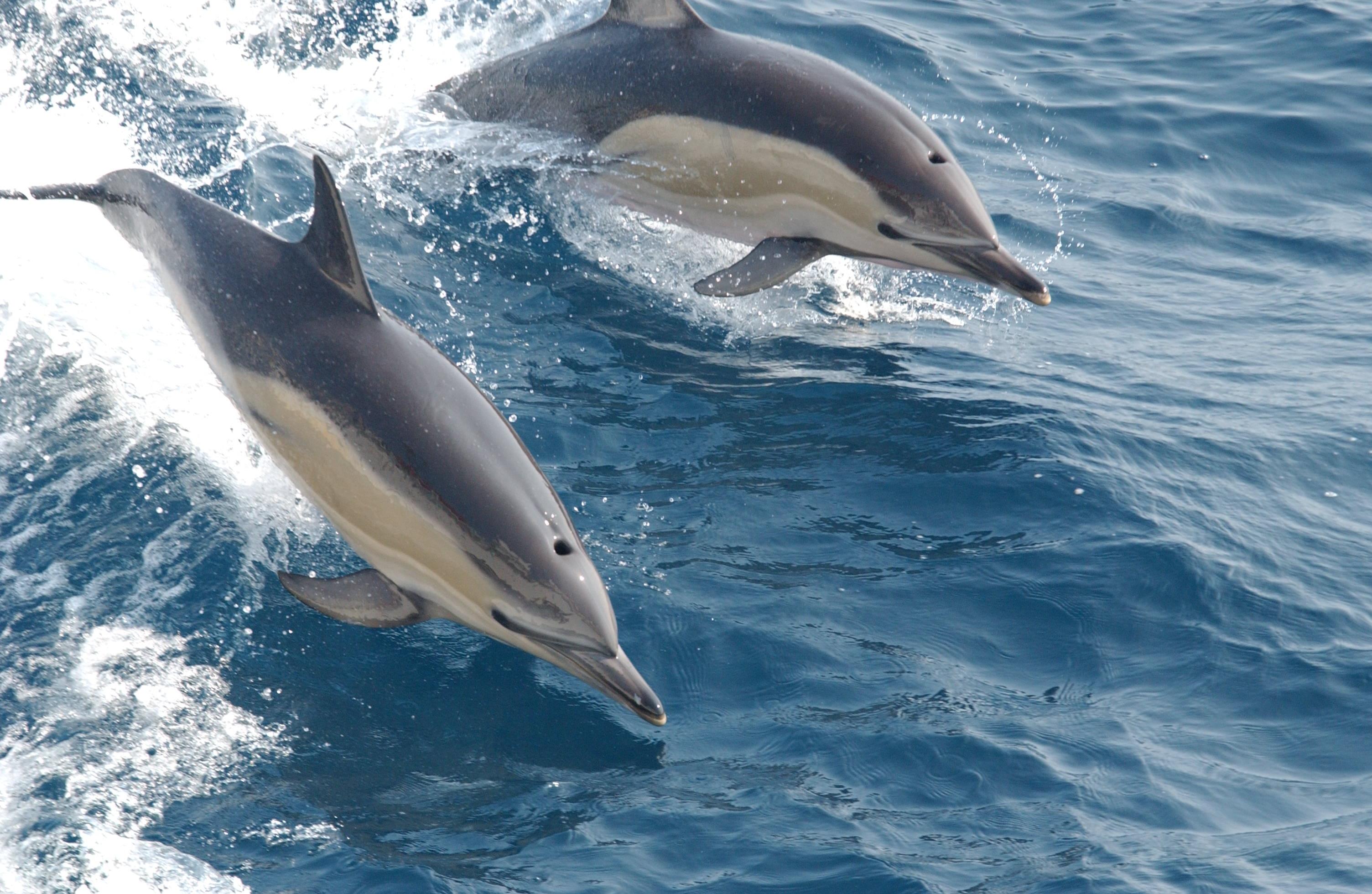 2018_CA_Dolphin_NOAA