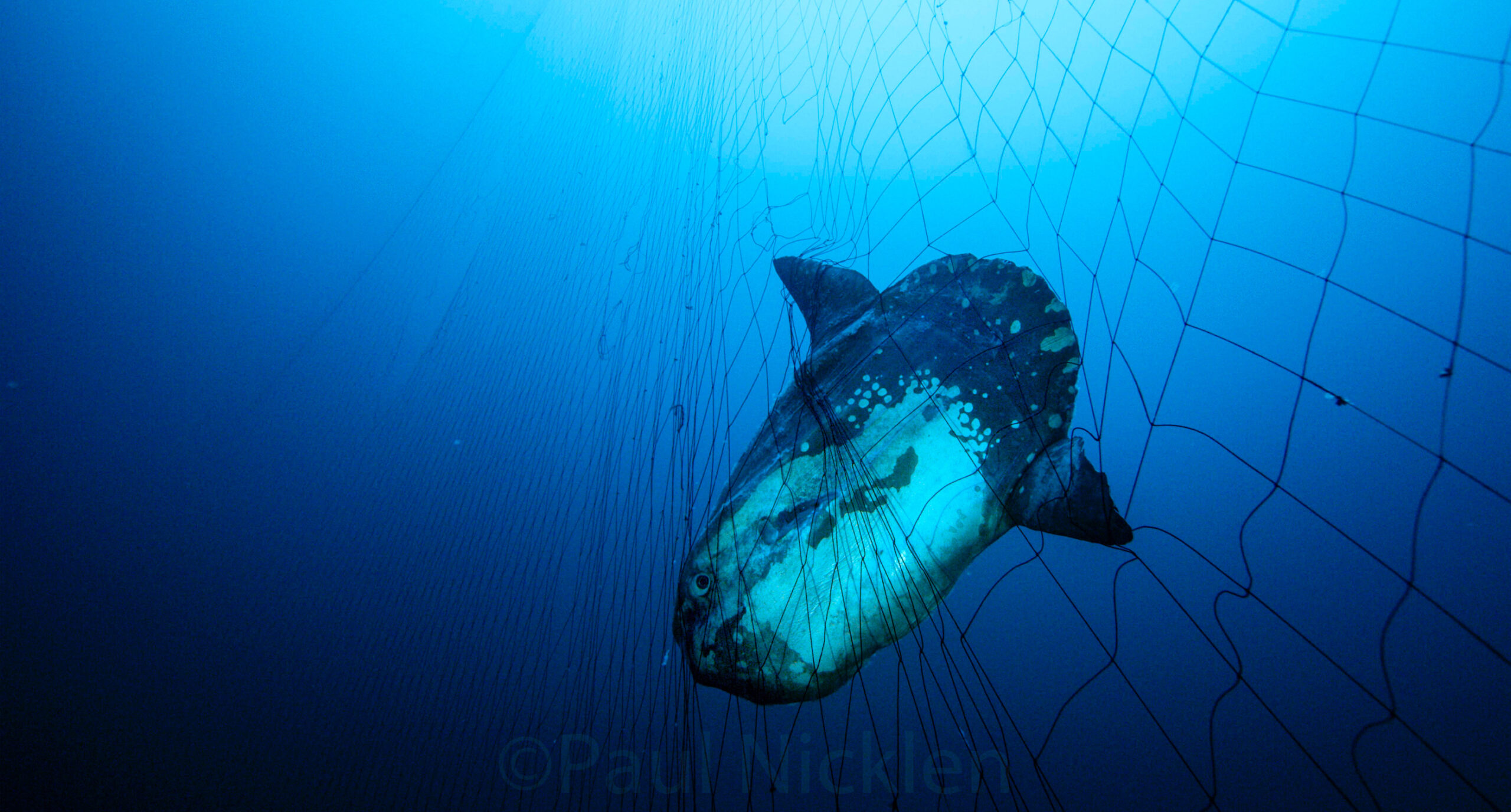 Reps. Lieu and Fitzpatrick Roll Out Bipartisan Driftnet Modernization and Bycatch Reduction Act