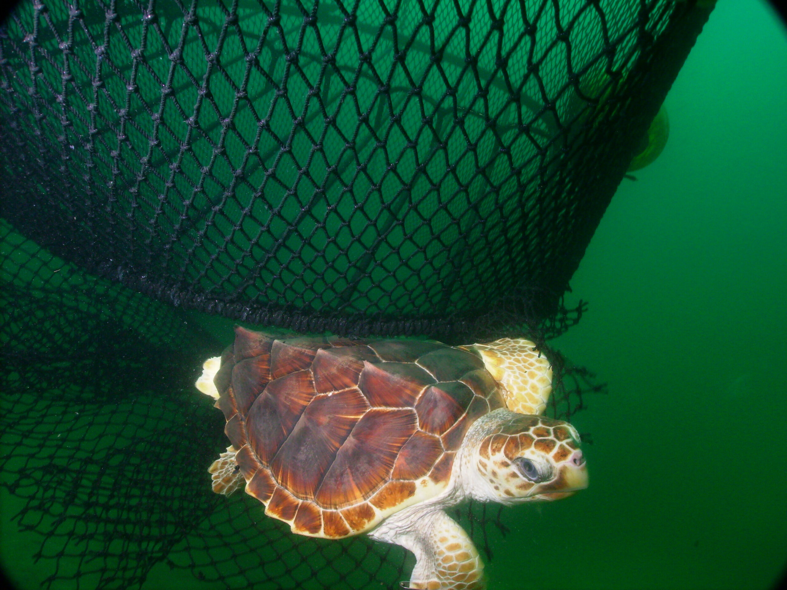 Feds to Be Sued for Weakening Sea Turtle Protections