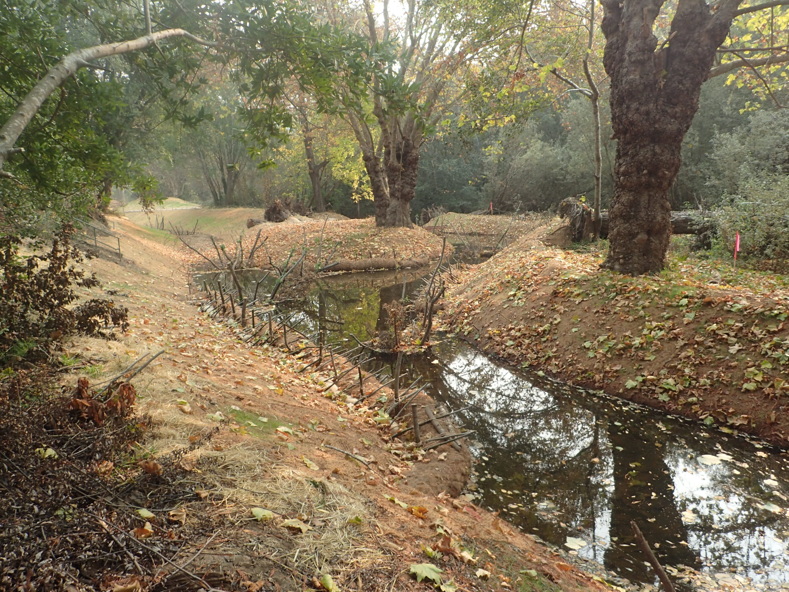 Tocaloma Restoration Project: Phase 1 Complete!