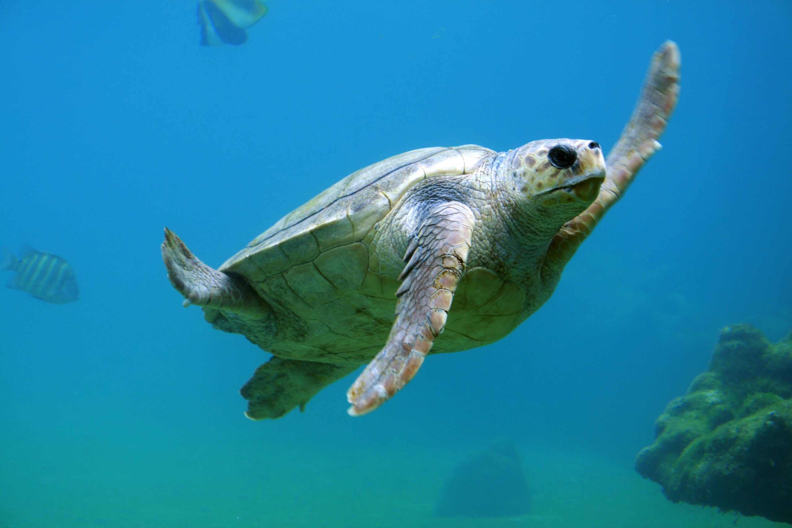 Five Sea Turtle Friendly Resolutions to Make in 2019