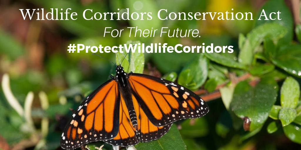 TIRN Supports Wildlife Corridors Conservation Act