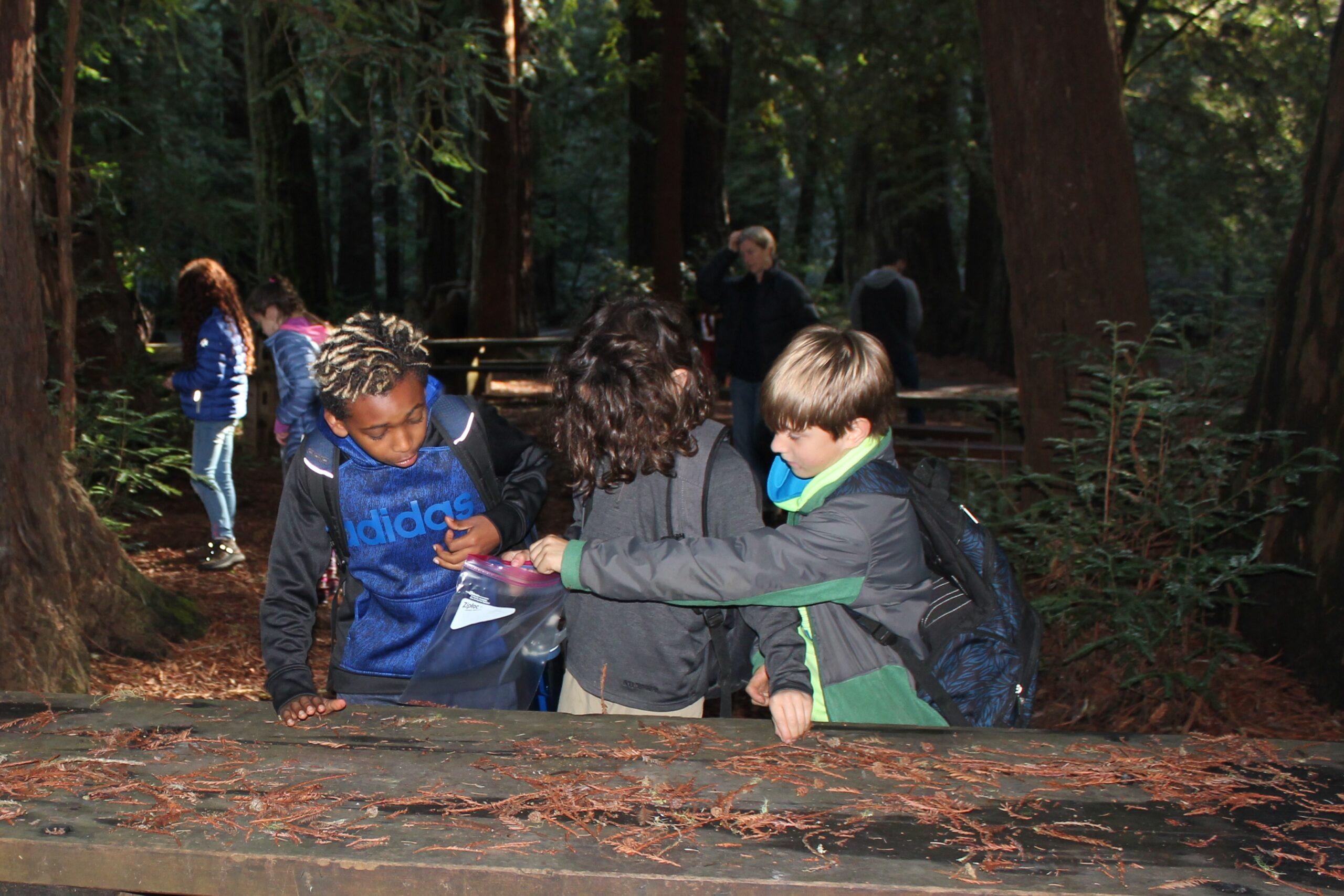 Local Elementary Schools Help SPAWN Seed Redwood Trees
