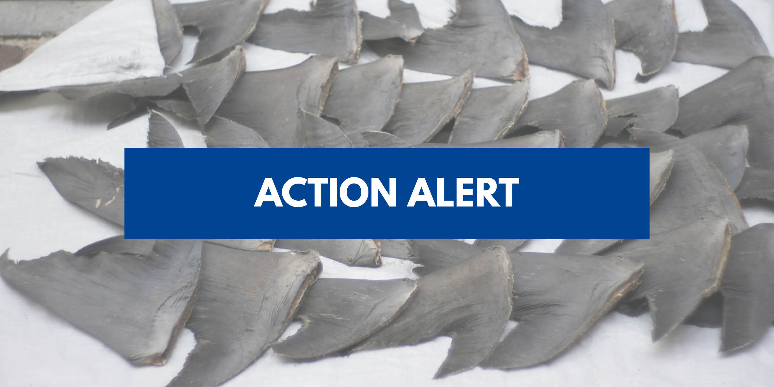 Help Pass Legislation to Protect Sharks & Rays