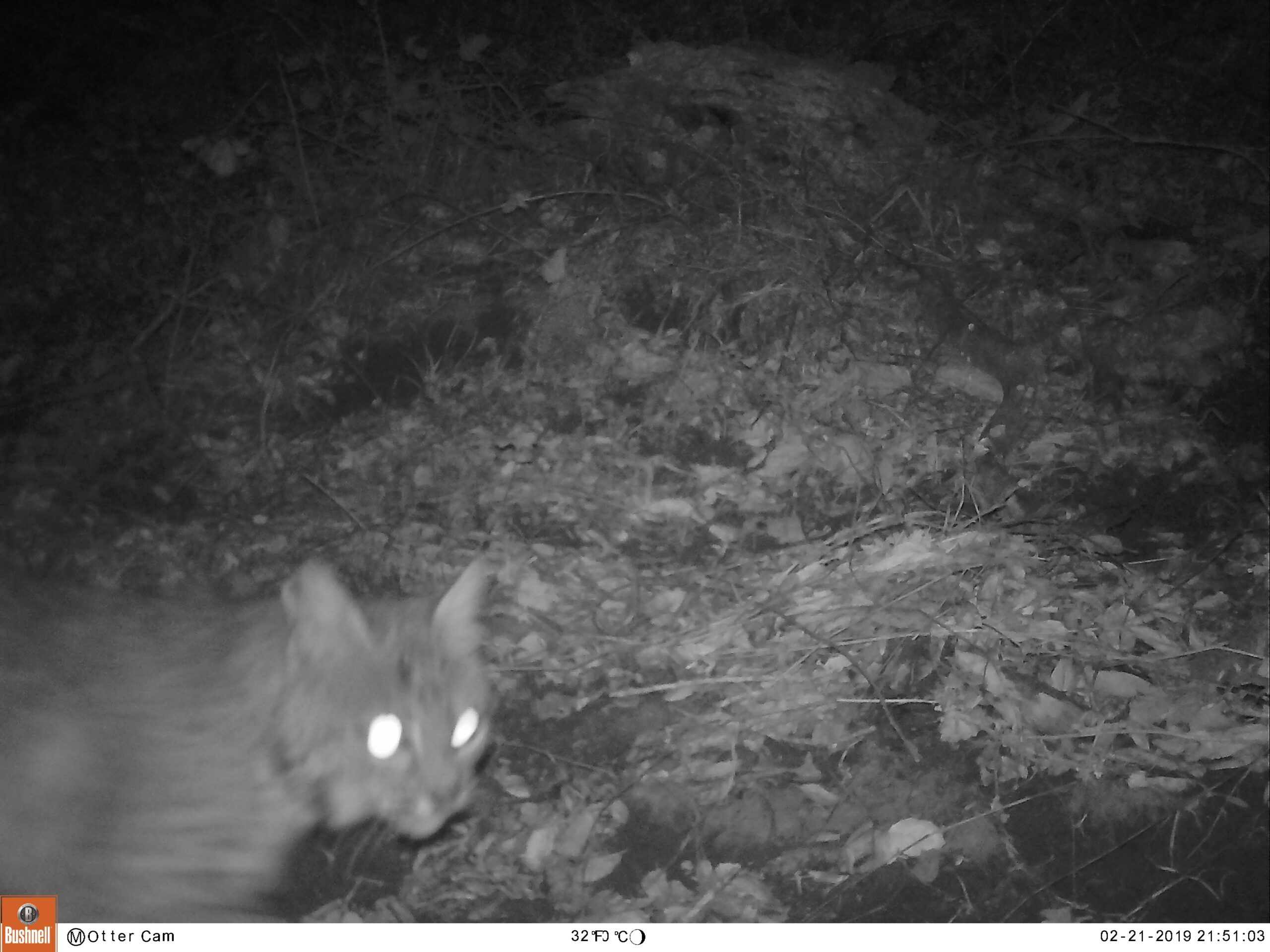 What SPAWN's Trail Cams Tell Us About Lagunitas Creek Watershed