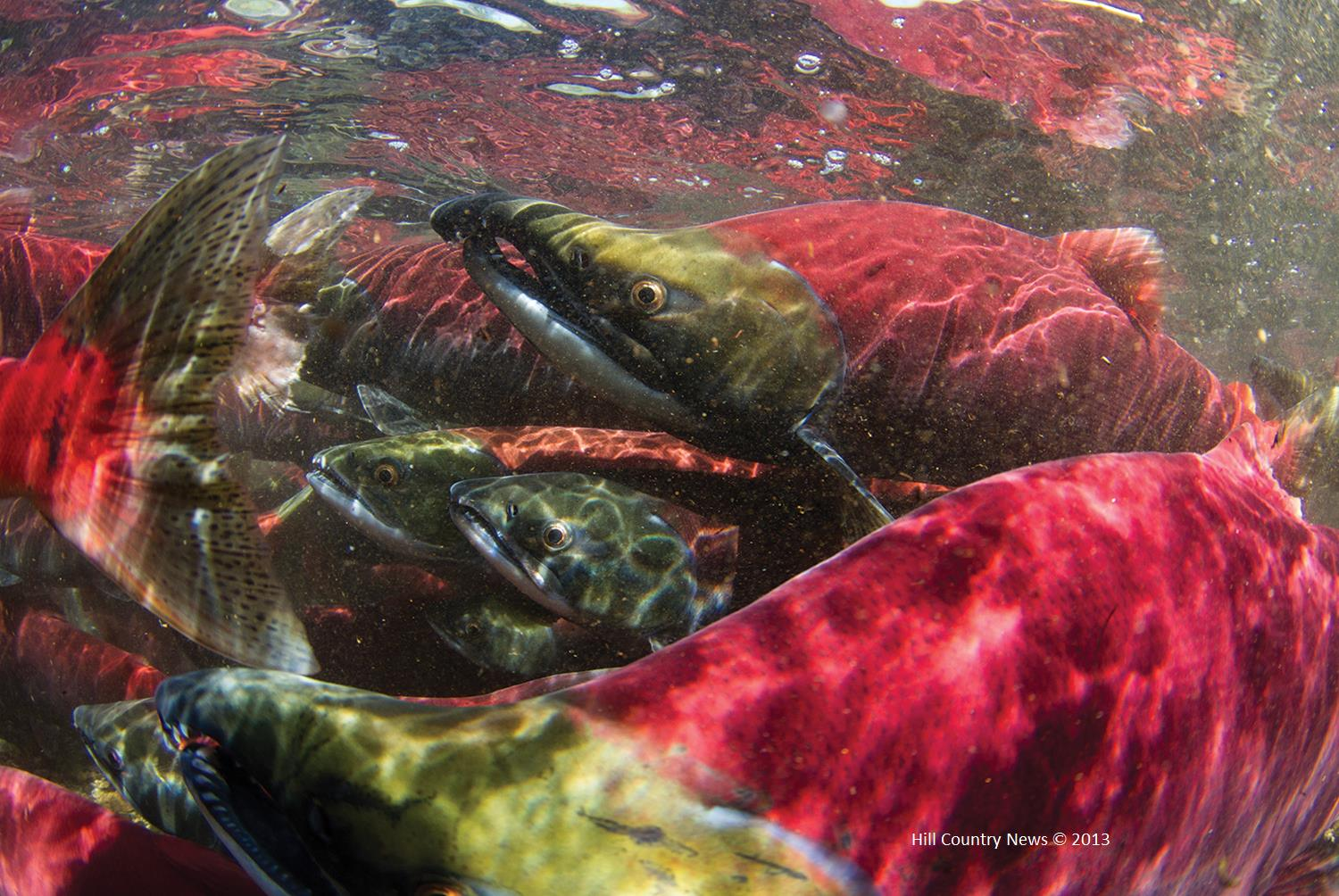 Earth Day Offers Bay Area a Chance to Improve Habitat for California's Most Endangered Salmon