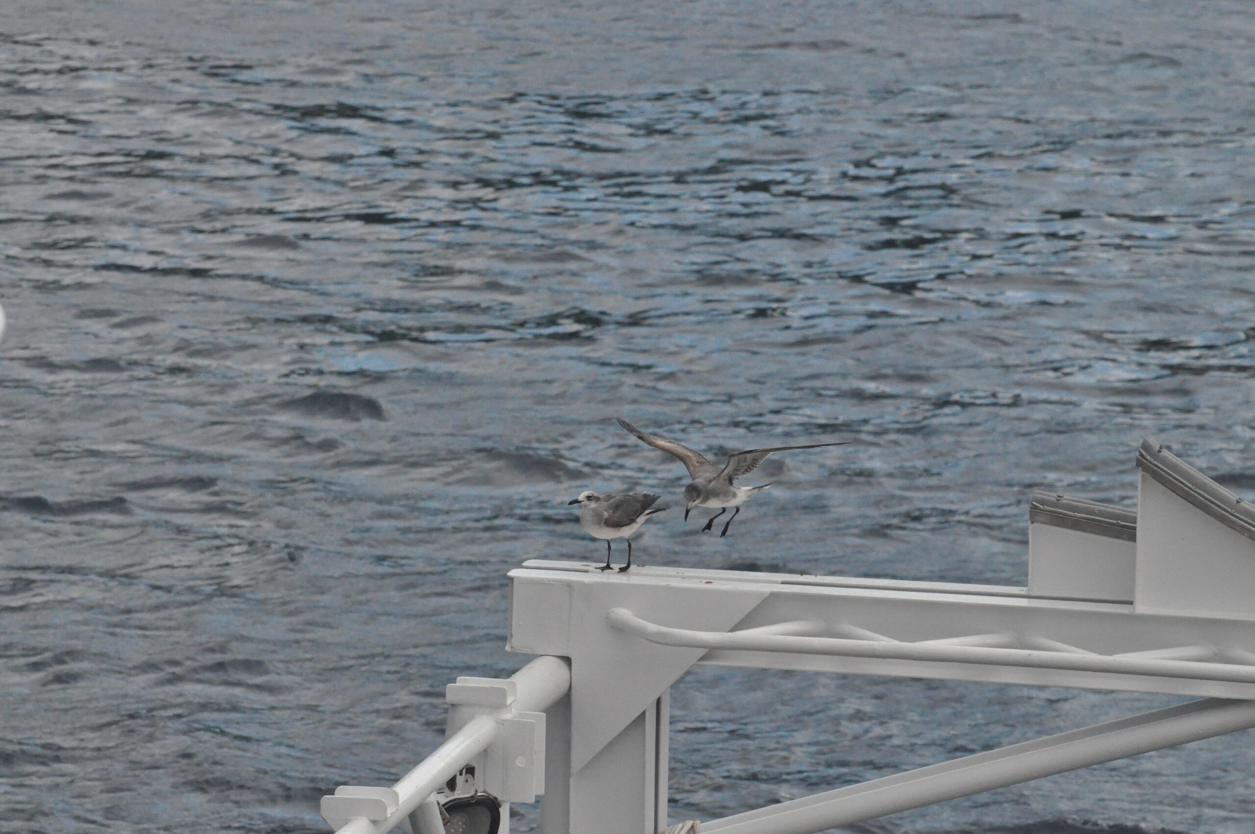 April 2019 Cocos Expedition: The Crossing