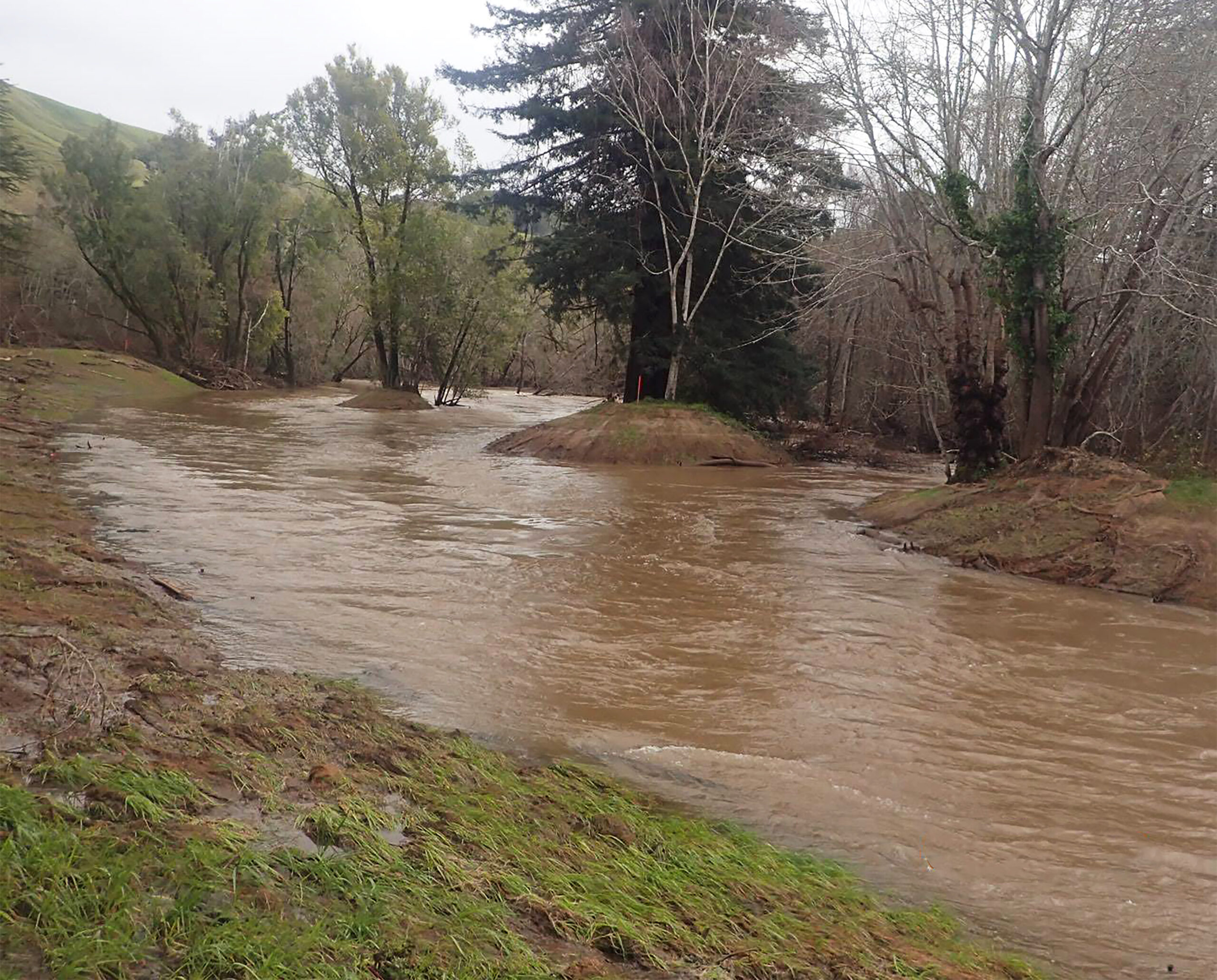 Restoration Activates Channels and Floodplains in Lagunitas Creek this Winter