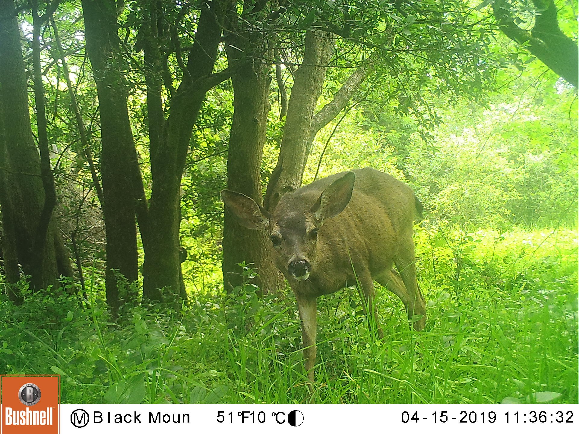 SPAWN Trailcams Show Diurnality of Multiple Species