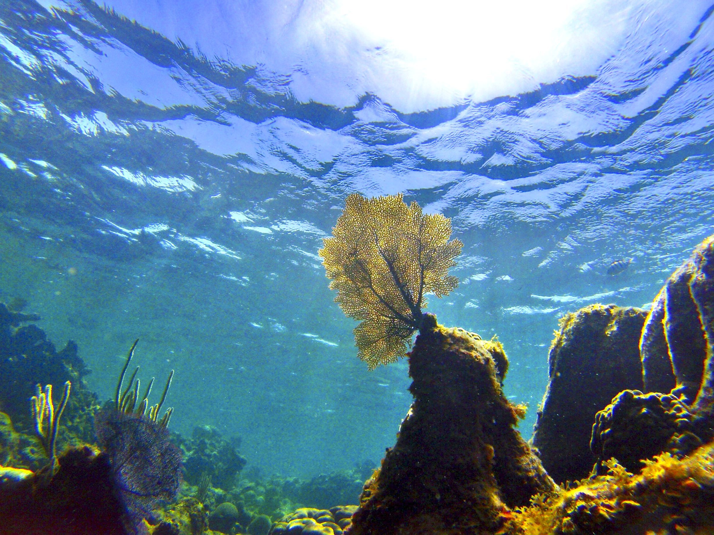 Federal Rules Could Protect Coral Reefs in Gulf of Mexico