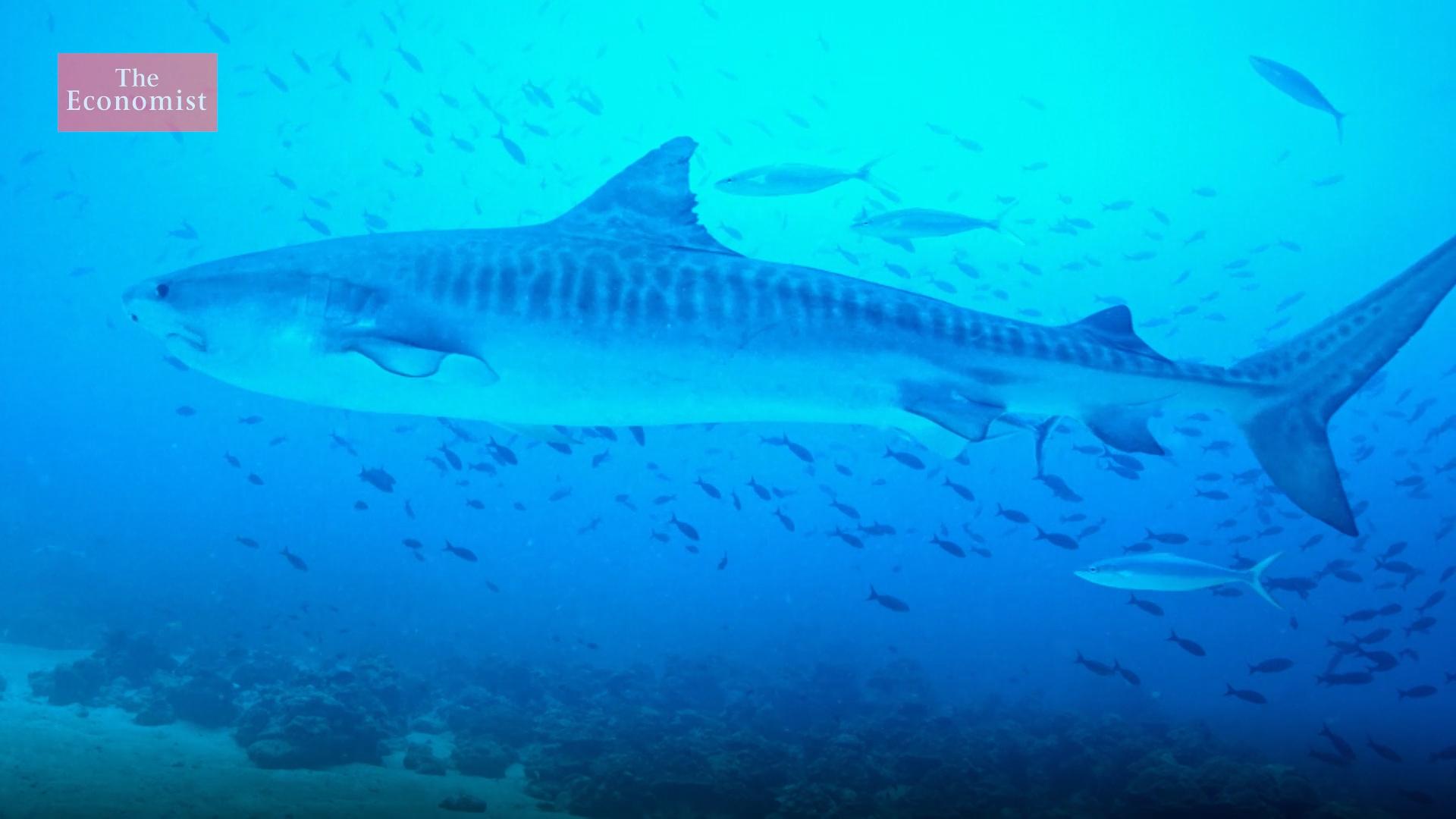Economist Short Doc Highlights Cocos-Galapagos Swimway