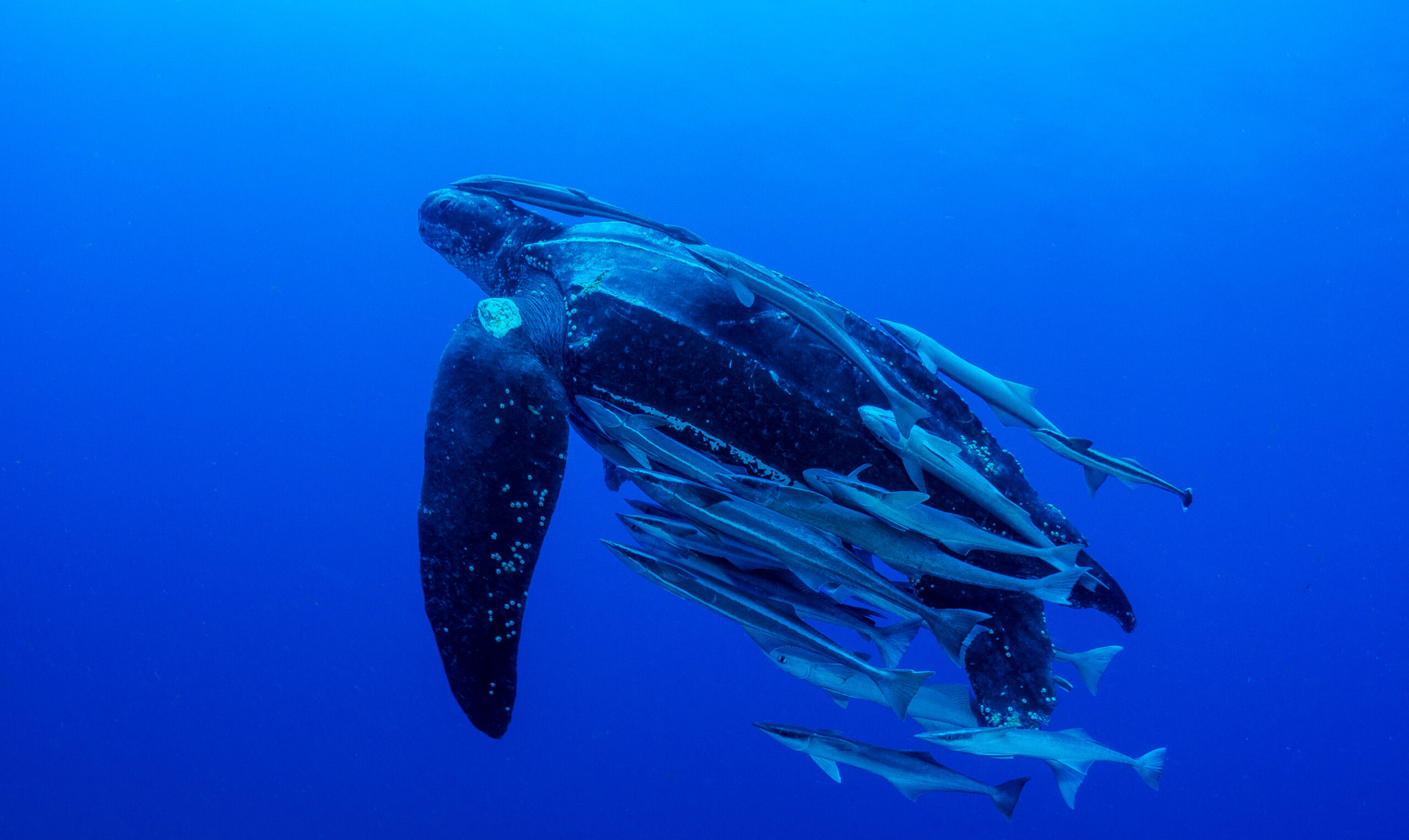 Court Defeats Trump-Approved Longline Fishing Permit Deadly to Sea Turtles