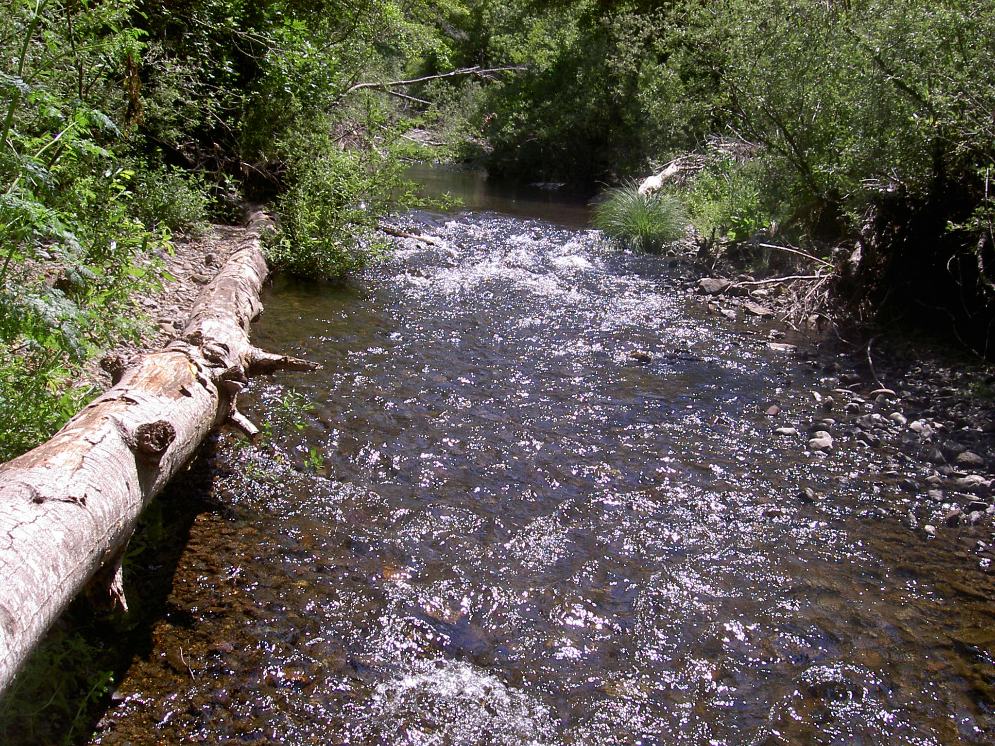 Trump Administration Slashes Protections for Bay Area Streams