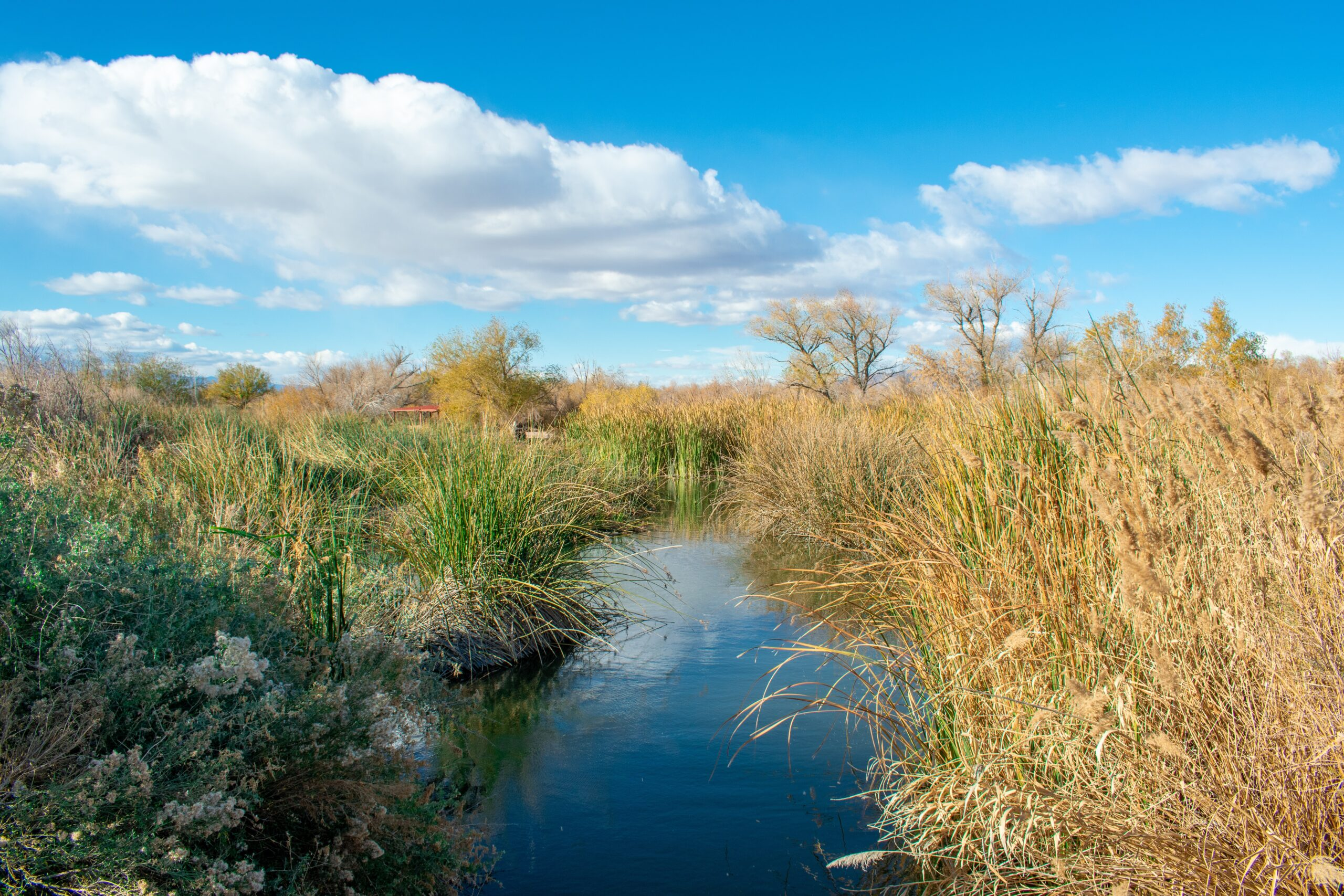 Lawsuit Challenges Loopholes in Obama-era Rule Exempting Wetlands and Streams from Clean Water Act Protections