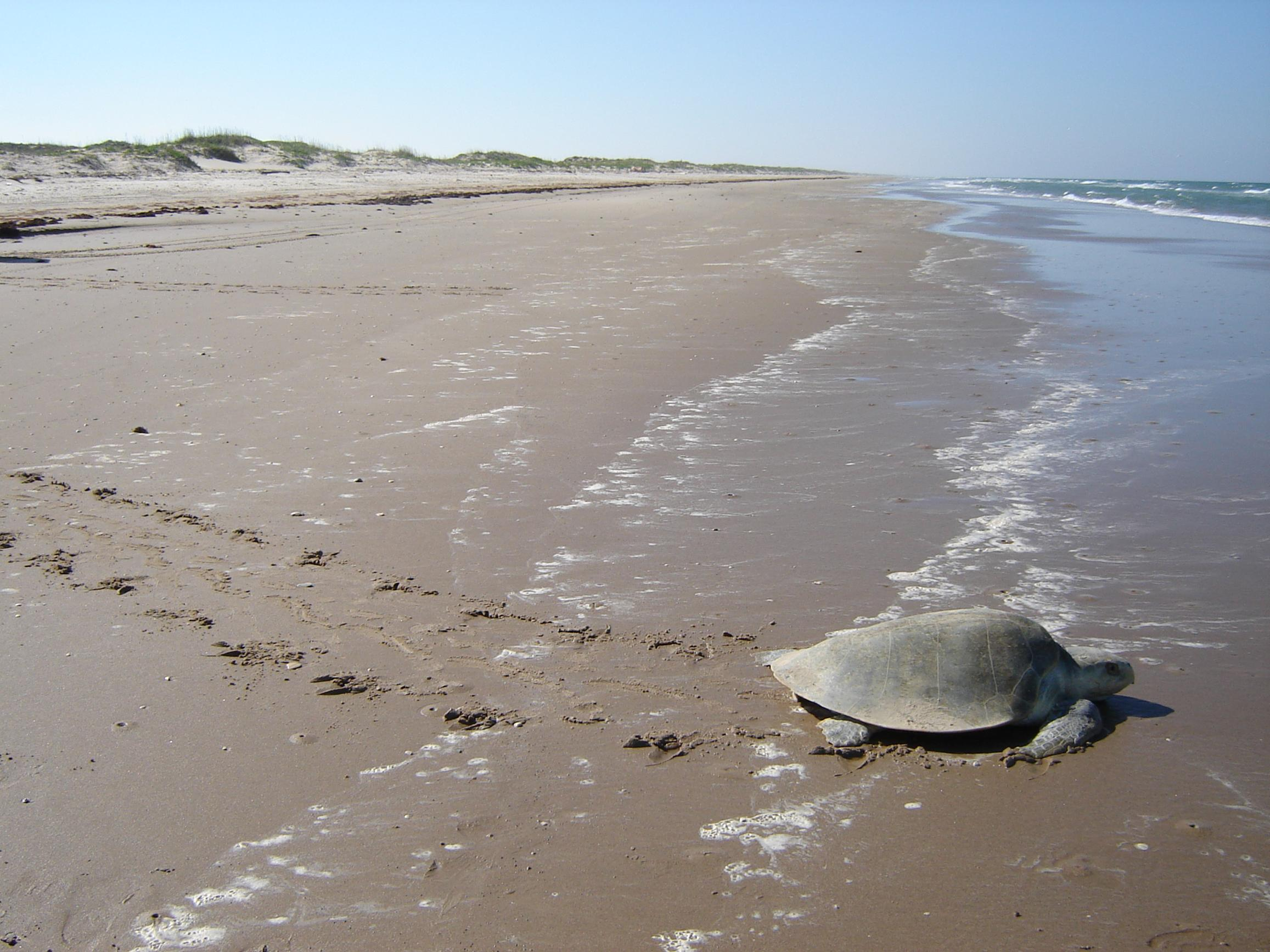 Stop SPOT: Take Action Against a Proposed Oil Terminal Threatening the Texas Coast