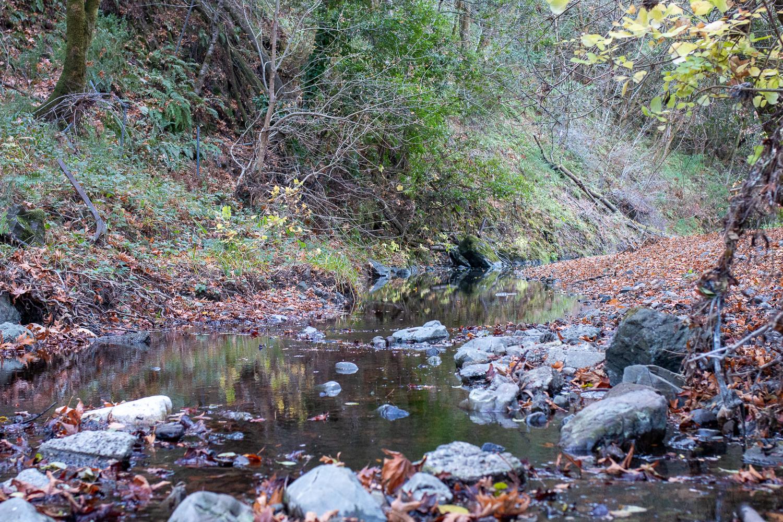 Turtle Island Restoration Network Purchases Four-Acre Propertyon San Geronimo Creek for Salmon Protection