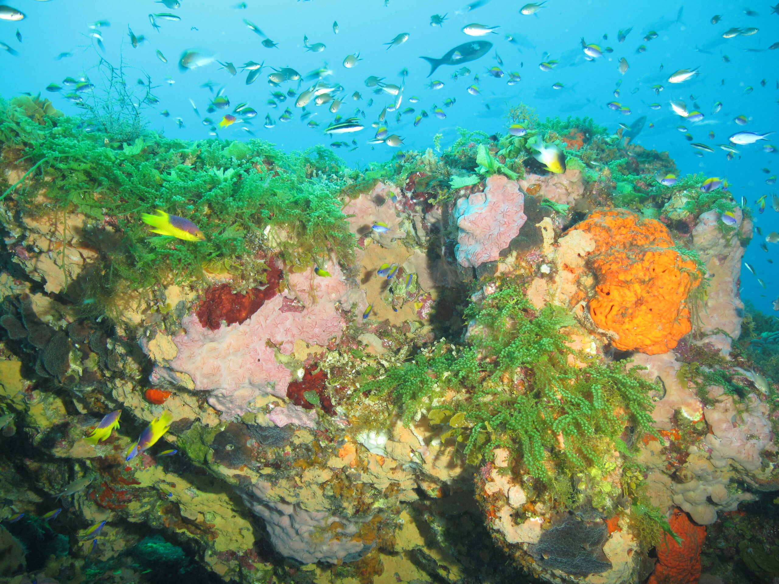 Proposed Rule Could Triple Size of Flower Garden Banks National Marine Sanctuary