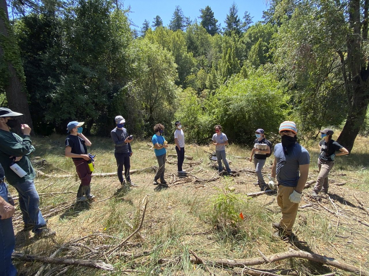 Eagle Scout Leads Invasive Plant Removal Project