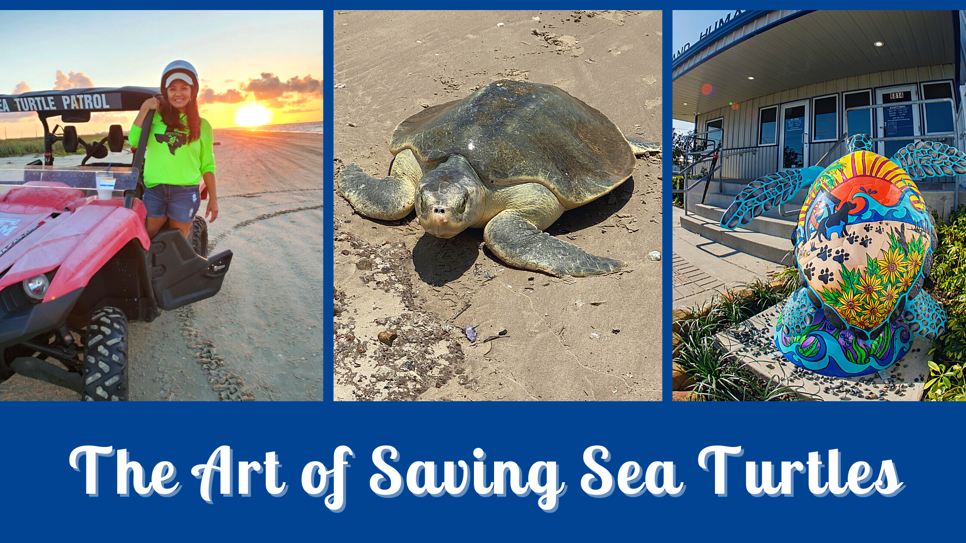 Third Annual 'Art of Saving Sea Turtles' Gala and Fundraiser to be Held Online