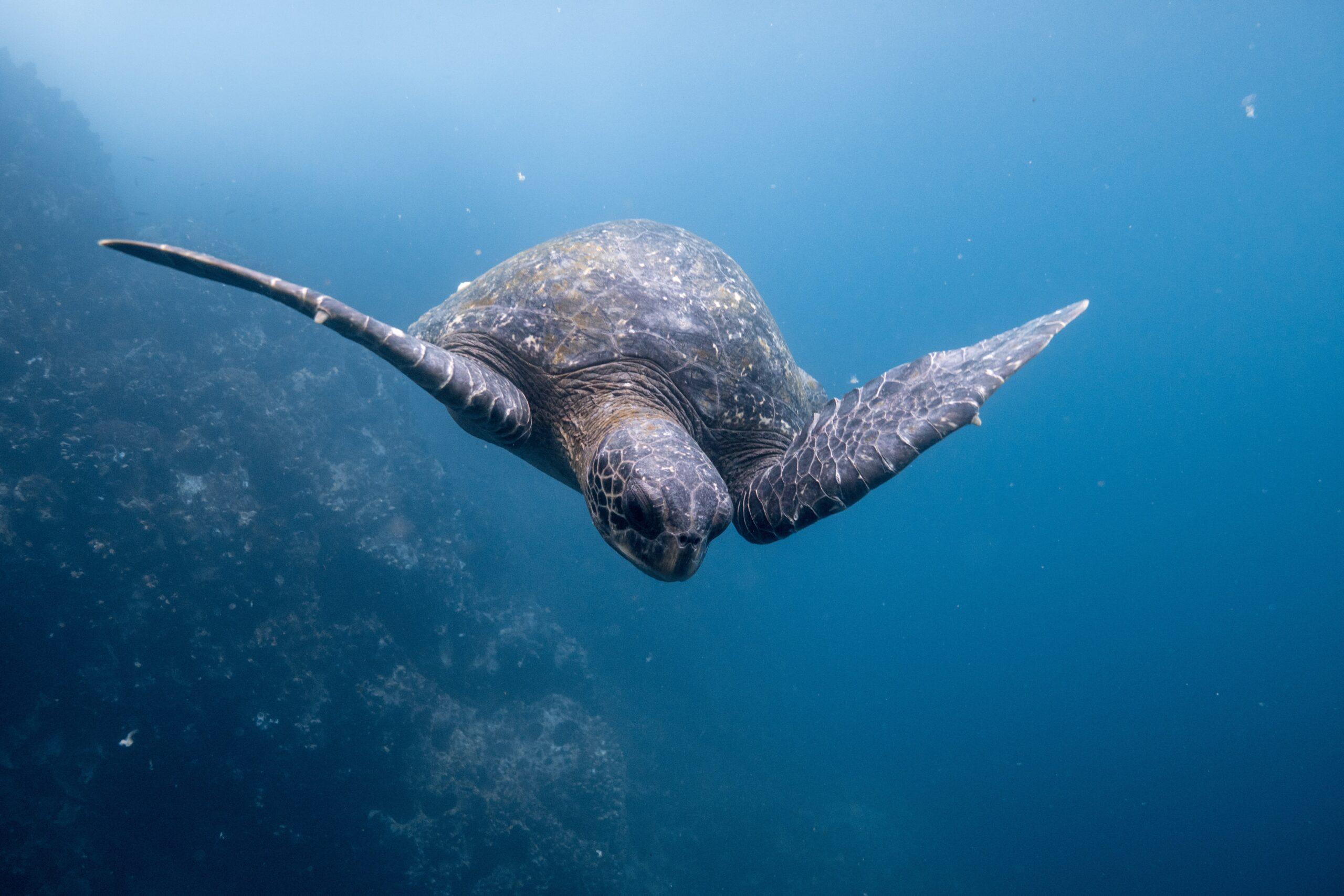 International Organizations Urge Ecuador to Expand Galapagos Marine Reserve